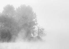 Guarded (John Westrock) Tags: trees blackandwhite mist lake nature monochrome fog foggy minimal highkey minimalism canon135mmf2lusm borstlake canoneos5dmarkiii johnwestrock