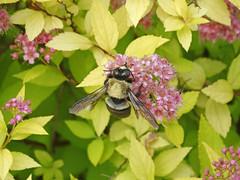 DSC00691 (gregnboutz) Tags: flowers flower macro macros springflowers brightflowers macroflowers macroflower bloomingflower bloomingflowers colorfulmacros