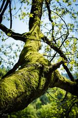 der Sonne entgegen (-BigM-) Tags: wood tree forest germany deutschland holz wald baum rinde pfalz deutsche weinstrasse