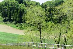 10Ikari Field Farm (anglo10) Tags: field japan kyoto