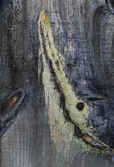 Aaooooh (Doris Burfind) Tags: wood abstract texture barn design wolf grain knots