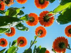 PhoTones Works #6667 (TAKUMA KIMURA) Tags: plant flower landscape scenery natural air jp      okayama kimura    takuma  a01   photones