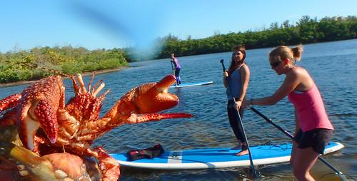 5-1-15-Paddleboard-Yoga-Teacher-Training-Sarasota-FL 6