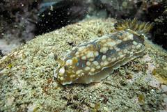 20150530-DSC_0789.jpg (d3_plus) Tags: sea sky fish nature japan scenery underwater snorkeling   shizuoka    izu  manaduru kotogahama   skindiving minamiizu      nikon1  hirizo  nakagi nikon1j1  1nikkorvr1030mmf3556pdzoom