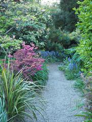 Tregenna Castle Garden (RS_1978) Tags: uk england cornwall unitedkingdom gb carbisbay vereinigteskönigreich grosbritannienundnordirland olympusem5ii
