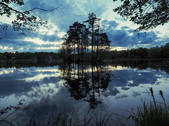 Island in the Lake (Jens Haggren) Tags: trees sky lake water clouds reflections island evening sweden olympus omd em1