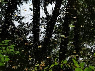 Dark reflections  (Explored)