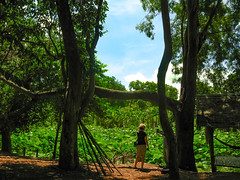 (Kelly Rene) Tags: travel color tree green nature rural pond cambodia southeastasia day afternoon outdoor waterlilies frame kh lush lilypad battambang indochina watbanan battambangprovince
