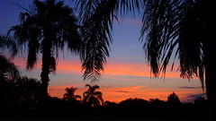 Tropical Sunrise (Jim Mullhaupt) Tags: pictures camera morning pink blue red wallpaper sky orange sun color tree weather silhouette yellow clouds sunrise landscape photography dawn photo nikon flickr florida snapshot picture palm exotic p900 tropical coolpix bradenton geographic sunup nikoncoolpixp900 coolpixp900 nikonp900 jimmullhaupt