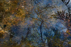 Puddles (Multiple Exposure) 86 (pni) Tags: reflection tree water silhouette suomi finland leaf helsinki branch multipleexposure helsingfors tripleexposure multiexposure seurasaari skrubu pni fölisön pekkanikrus
