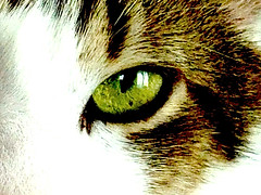 My Cat (Fana ) Tags: portrait pet brown white green animal cat eyes chat yeux marron blanc verts fanawatches watchelse