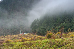 JD9_9641 (james album) Tags:   taiwan taichung travel travelpic    wulingfarm  fog landscape