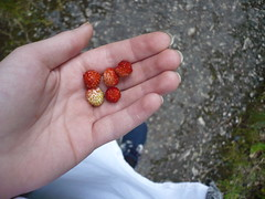 (ladyedit) Tags: nature fruits fruit strawberry strawberries
