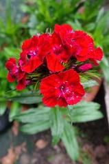 I colori della primavera (Luciana.Luciana) Tags: flowers primavera spring colours fiori colori printemps frhling