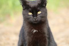 Hi do you like me ? (excellentzebu1050) Tags: pet animal closeup cat outdoor farm animalportraits coth5 cats2016cattlemay