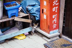Today's Cat@2016-06-11 (masatsu) Tags: cat pentax catspotting mx1 thebiggestgroupwithonlycats