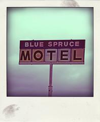 BLUE SPRUCE MOTEL (Leo Reynolds) Tags: polaroid fake faux phoney fakepolaroid fauxpolaroid poladroid phoneypolaroid xleol30x