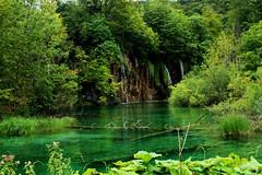 Plitvice lakes (Alex Mary) Tags: travel blue nature water europe natural lakes croatia lagoon adventure explore traveling plitvice