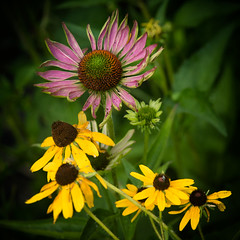 Wild (Darren LoPrinzi) Tags: 5d canon5d canon miii square squareformat nature colors flowers wild magenta pink yellow green colorful natural