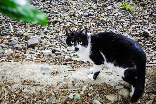 Today's Cat@2015-05-10