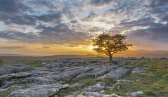 Last light at Winskill Stones (bingleyman2) Tags: light sunset sky orange tree evening colours yorkshire limestone lone dales hawthorn ingleborough