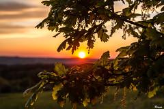 Sunset (Rianetna) Tags: sunset quercus beech buk quercia quercusrobur beechleaf fiorediquercia beechflower dubletn beechinbloom kvtdubu listdubu dubovlist