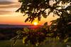 Sunset (Rianetna) Tags: sunset quercus beech buk quercia quercusrobur beechleaf fiorediquercia beechflower dubletní beechinbloom květdubu listdubu dubovélistí