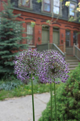 Three Brothers (Flint Foto Factory) Tags: city flowers houses urban plants chicago brick beautiful three illinois spring weekend south side may saturday row neighborhood pullman urbannature blooms memorialday 2015 e112thst
