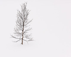 """Solitude #1"" (Ronny rbekk - http://arcticphotography.no) Tags: norway canon landscape norge fotograf norwegen arctic norwegian nordnorge harstad troms norsk canonphotography northernnorway flickrsbest specland canonphoto norwegianphotographer visipix ronnyrbekkphotography ronnyrbekk"