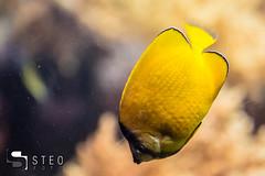 5D__5464 (Steofoto) Tags: genova porto pesci acquario darsena crostacei rettili cetacei molluschi