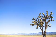 (Melissa Emmons Photography) Tags: california street trees cactus sky mountains silhouette clouds canon landscape losangeles spring desert adventure canon5d downtownla neverstopexploring