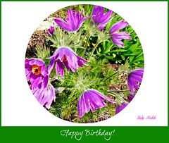"""""""Do not count the candles, look at the light they give.  Do not count the years; but notice the life you live."""" (Trinimusic2008 - stay blessed) Tags: birthday toronto ontario canada nature dedication card to happybirthdayted trinimusic2008 pulsatillas judymeikle"""