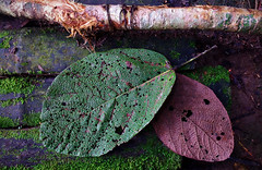 Textures colors and paterns, oh my! (David E Finol) Tags: musgo nature leaves hojas moss textures organic texturas orgnico nuevaloja davidfinol mororolag3