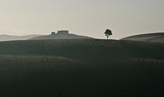 Tree and houses (hbothmann) Tags: cretesenesi toskana tuscany toscana