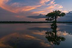 Lake Martin, Louisiana (kurtloup) Tags: sunset reflections moss lakemartin louisiana swamp cypress tree