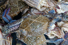 DSC06958 (Almixnuts) Tags: market tani pasar outdoormarket pasartani