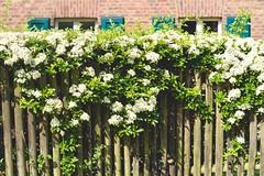 (evau61) Tags: fence cologne kln zaun