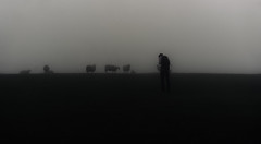 Loner (fragrance190) Tags: a7rii 55mm fog sheep melancholy burial loner burialloner sonyalpha alpha zeiss 55mm18 55mmzeiss atmosphere mist nostalgia shadow shadows dark woe breathe cold