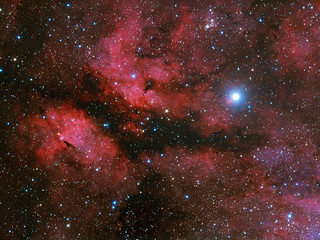 γ Cygni and IC 1318