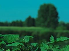 profilo (conteluigi66) Tags: luiigiconte libellula profilo verde insetto argie fiume prato erba pianta piante foglie profonditadicampo
