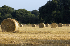 Everything In Circles (Andy Tee) Tags: hay bale farmland farm field crops harvest round circular circles landscape