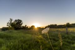 20160824_Obersee-32 (www.arternative-design.com) Tags: bielefeld d810 landschaftsfotografie liebefeld nikkor nikon nikond810 owl obersee ostwestfalen ostwestfalenlippe sonnenuntergang tamron tamron1530 vieadukt weitwinkel landscape landscapeporn sundown sunset