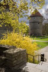 Kiek in de Kök (Cattail_) Tags: spring tallinn estonia walls bastion kök kiek