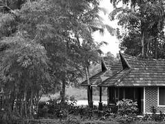 Kerala, India. (Deb Jones1) Tags: travel bw india 1 jones places kerala bamboo explore 1001nights deb flickrduel peoplebeauty natureindia best4gpin bestphoto4gpinaug2011 bestphoto4gpinsep2011 debjones1