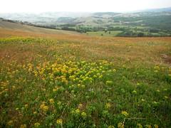 Divčibare 094 (jecadim) Tags: flowers wild mountain trekking spring hiking meadow divčibare