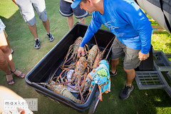 IMG_4290 (Max Kehrli) Tags: waves tournament lobster bermuda annual makin 2014 makinwaves