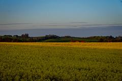 untitled-3 (Tubaaage) Tags: nightphotography blue sunset sky lighthouse denmark himmel hirtshals danmark fyr solnedgang nordjylland vendsyssel visitdenmark northdenmarkregion