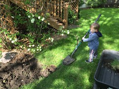 "Paul Helps Daddy in the Yard • <a style=""font-size:0.8em;"" href=""http://www.flickr.com/photos/109120354@N07/26513196964/"" target=""_blank"">View on Flickr</a>"