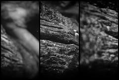 Old Wood (Anastasia Dianova P.) Tags: wood bw naturaleza nature monochrome dark madera monocromatico