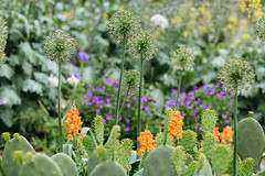Duke Gardens (Dan | Hacker | Photography) Tags: cactus outdoors durham northcarolina dukegardens vscofilm